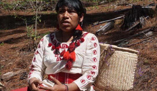 Defensores comunitarios tenían la protección del Estado mexicano y aún así los mataron